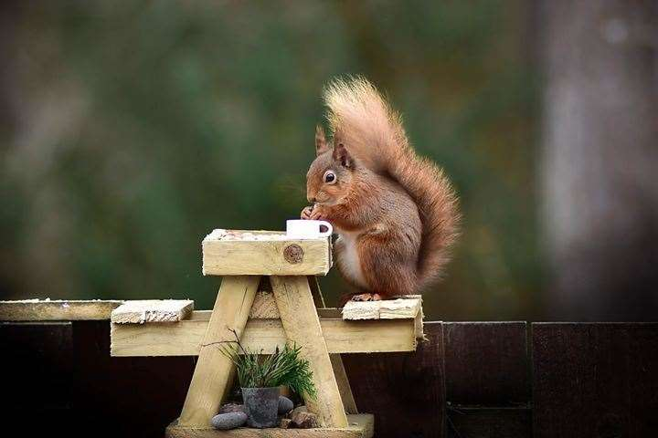 A squirrel at its dinner table. Picture: John Beats
